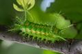 Multi  Green Antena Caterpillar