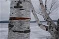 Adirondack White