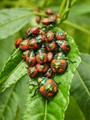 colourful bugs