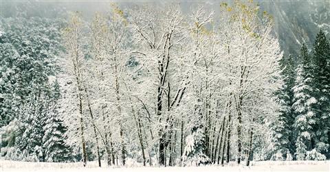 1st Snow, Yosemite Valley