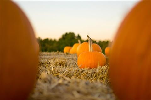 pumpkin patch-038