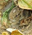 Bunny hide