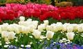Butchard gardens Victoria BC