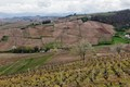 Beaujolais wineyard in April