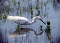 Love the Birds of Florida