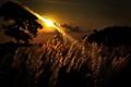 Golden Heaven......