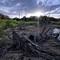 DSC06484-t20-Branch2-Cropped-Cooler-3840x2160: Trefall exposed, sunrise, Grapevine Lake