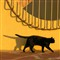 Black cat outside a coal mine