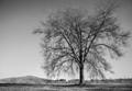 winter_tree_II-sm