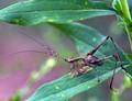 Grasshopper.