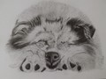 Drawn this a year ago in graphite