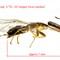 Fig wasp 4_5X Nanoha f22 Metz-lab