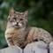 Fox perches atop the fence