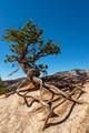 Ninja Tree