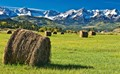 Hayfield on the edge of the Uncompahgre National Forest and the Mt. Sneffels Wilderness in Western Colorado.  First snow, last harvest.