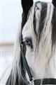 Horse's eye