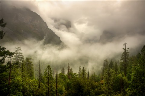 Yosemite Valley foggy