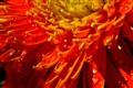 Sparkles on flower