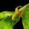 araniella curcurbitina 1600px