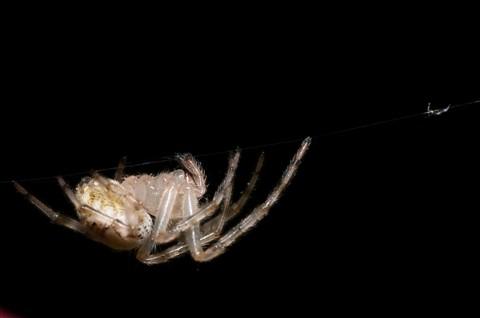 Spider-1-14