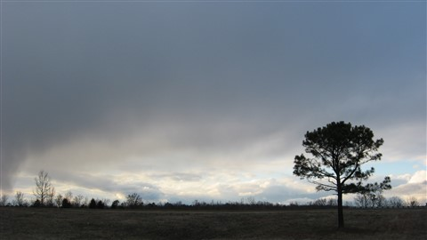 Lonesome Pine on Porter Road