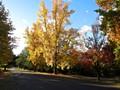 Bright Streetscape