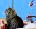 Kitty Carnival