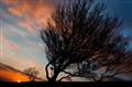bendy tree at sunset