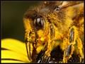 pollen partry