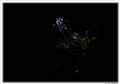 Bush frog in Dark