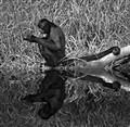BlackSpider  monkey