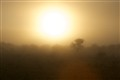 Foggy Sunrise in the Kalahari