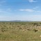 Stitched Panorama of the Serengeti