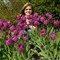 4478_karen_tulips_best