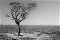 tree01