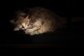 Barn cat napping on a wagon, lit by afternoon rays through a nearby barn window