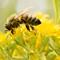 2017-01-31 Australia Melbourne Bee 1