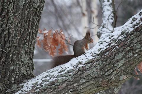 squirrelv2