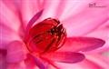 Soft polen
