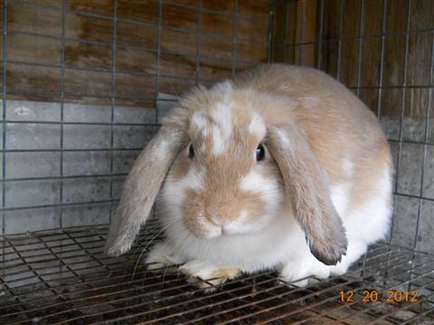 new rabbit 002