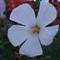 Daryl's Flower