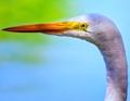 Photo taken at The Heron's Palace in Belem, Para, Brazil.