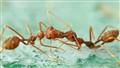 DSC03025 ants hd