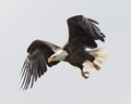 Liftoff of The Eagle