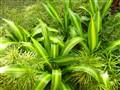 Green green grass away......