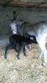 Donkey en zoon Willem
