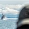 Dad with Breaching Humpback Whale in Icy Strait, Alaska