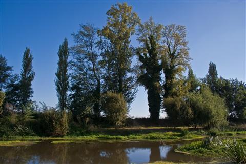 Leito Antigo do Rio Mondego - Montemor-o-Velho
