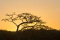 Sunrise in the Serengeti, Serengeti National Park, Tanzania-2946