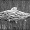 IMG_0141ps-DriftFish-002